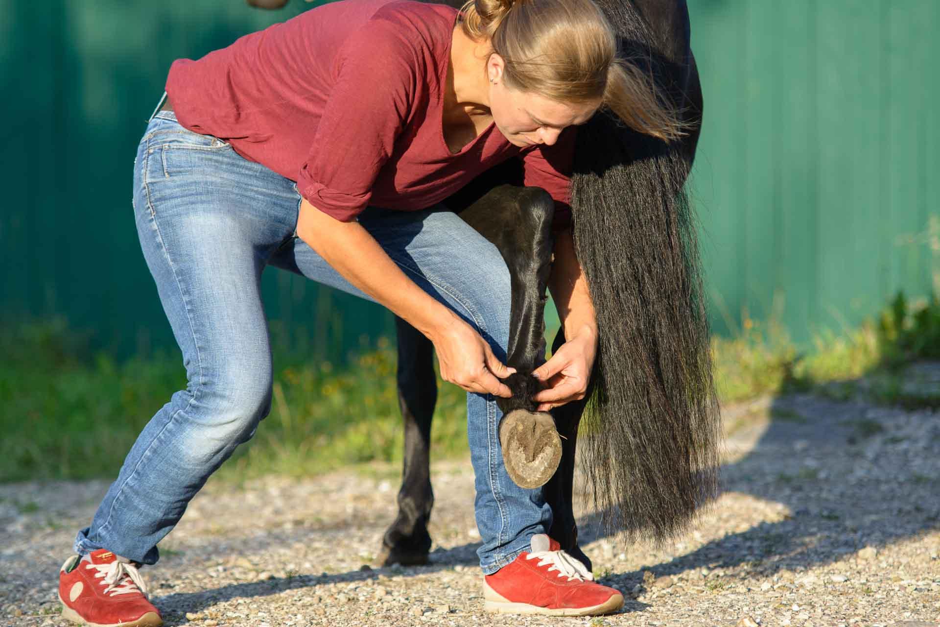 Jacqueline Hunderlage (zukünftig Lund), Tierärztin - Mobile tierärztliche Chiropraxis für Plön und Umgebung
